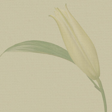 Lenten Prayer and Reflection